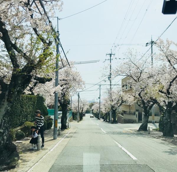苦楽園支部近くの桜♪