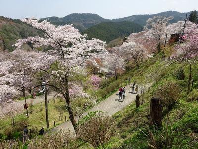 吉野山千本桜の旅