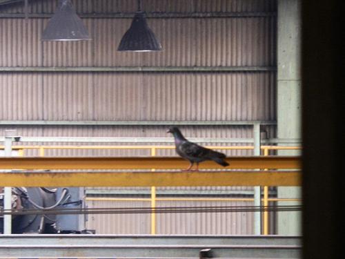 播磨町の工場でのはと対策工事です。