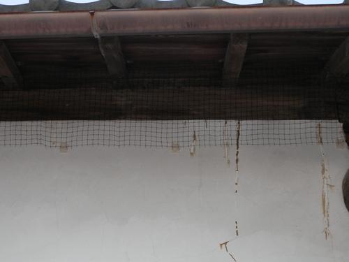 神戸市北区で蔵の屋根の下に住みついたハトの対策