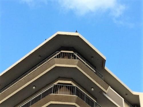 神戸市中央区北野のマンションのベランダネット張り