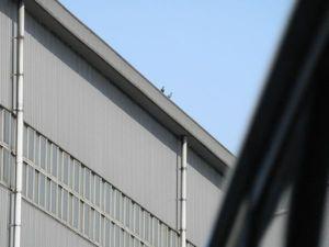播磨町人工島の工場ではと駆除