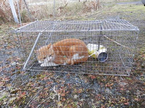 神戸市北区の団地で野良猫対策