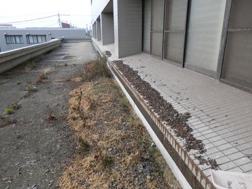 加古川市で建物の上階の窓面台に住みついたハトの対策