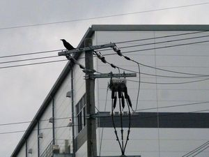 三田市のドラックストアー物流倉庫でのカラス対策工事