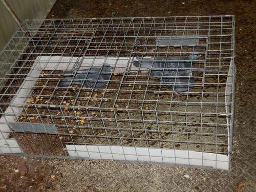 播磨町人工島の工場でのハト対策工事