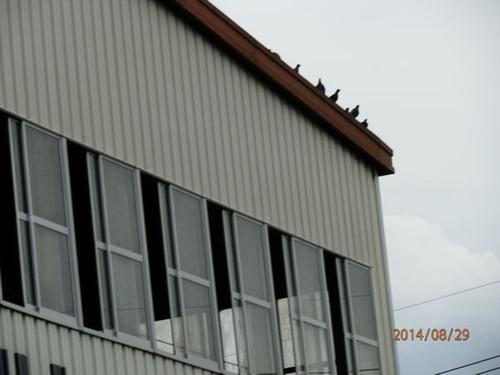加東市にある工場のはと対策工事です。