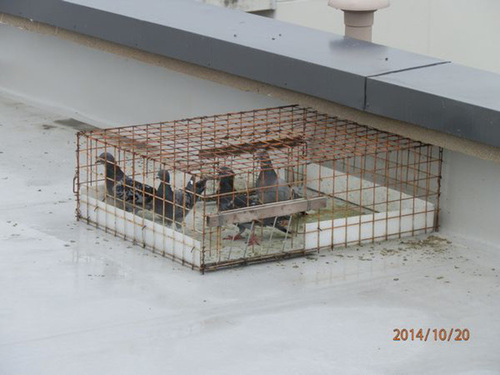 神戸市内にある集合住宅のはと対策工事です。