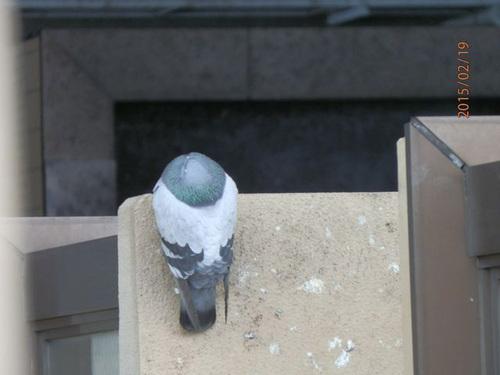 神戸市内にあるマンションのはと対策工事です。