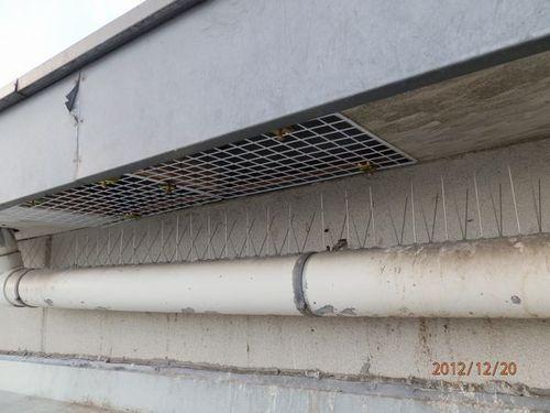工場の中にハトの糞が落ちてきて困っています