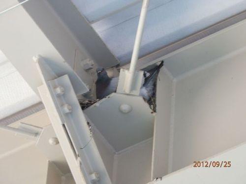 工場内のハトの捕獲です