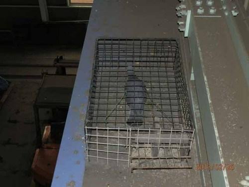 加古川市内にある工場内のはと駆除です。