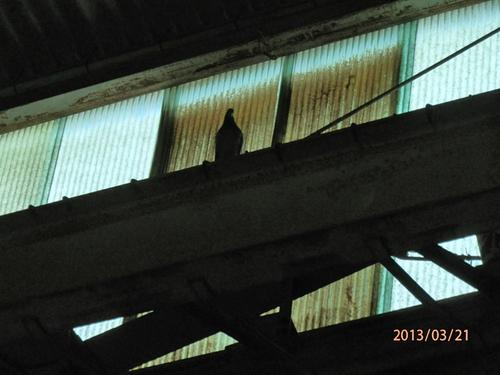 神戸市内にある工場のはと対策工事です。