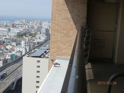 神戸市内のマンションベランダ1室のネット張りです。
