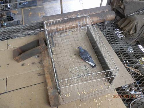 神戸市内にある鉄工所でのはと対策工事です。