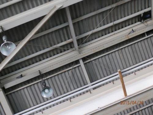 神戸市内にある自動車整備工場でのはと対策工事です。