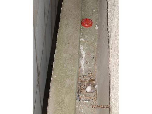 神戸市兵庫区のマンションではと対策工事です。