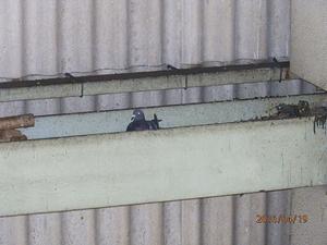 稲美町の会社工場のはと対策工事です。