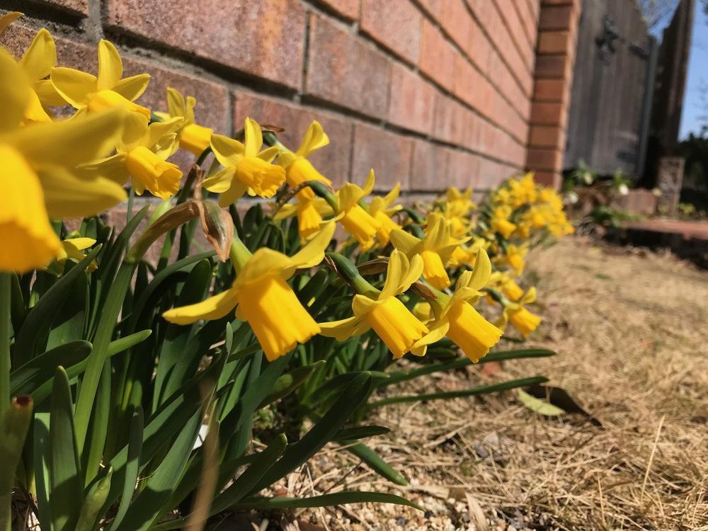 もうすぐ春ですね ♪