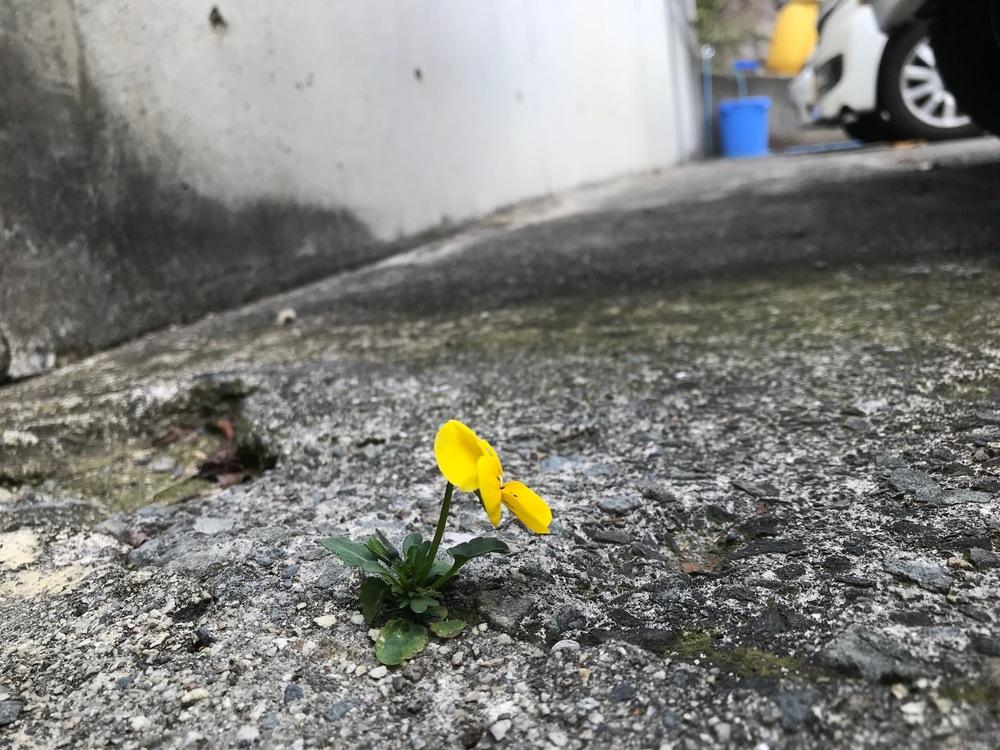 小さな春みつけた😊