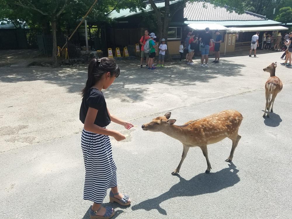 娘と二人で奈良公園