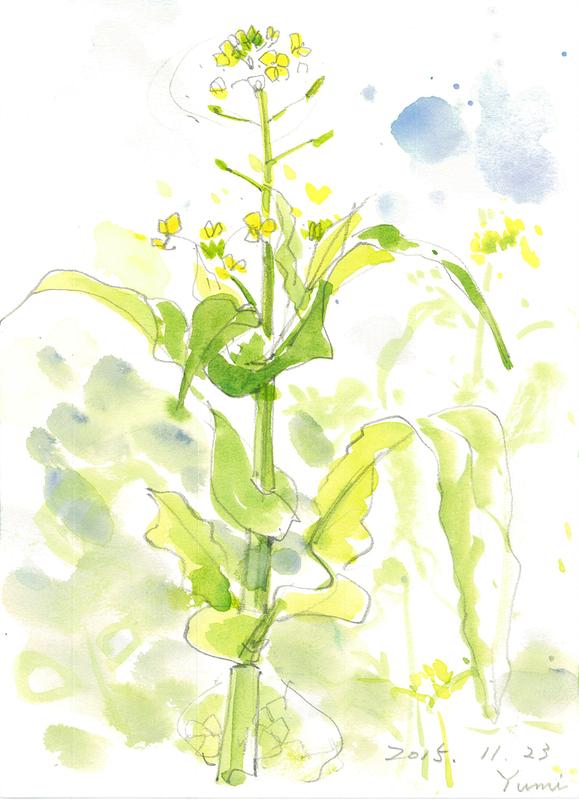 002_ カブラの花