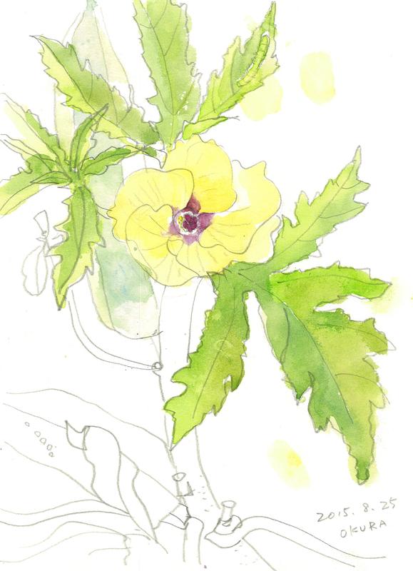 004_ オクラの花