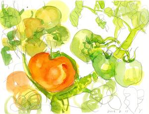 008_ ど根性トマト