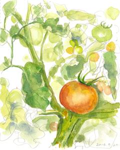 010_ 赤いトマト