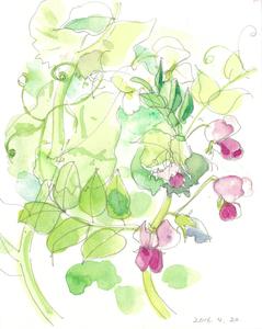 012_ 赤いエンドウの花