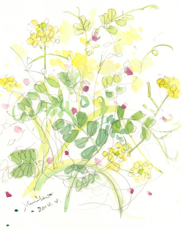 019_ 菜の花とカラスノエンドウ