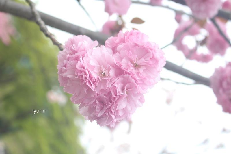 001 _喜び