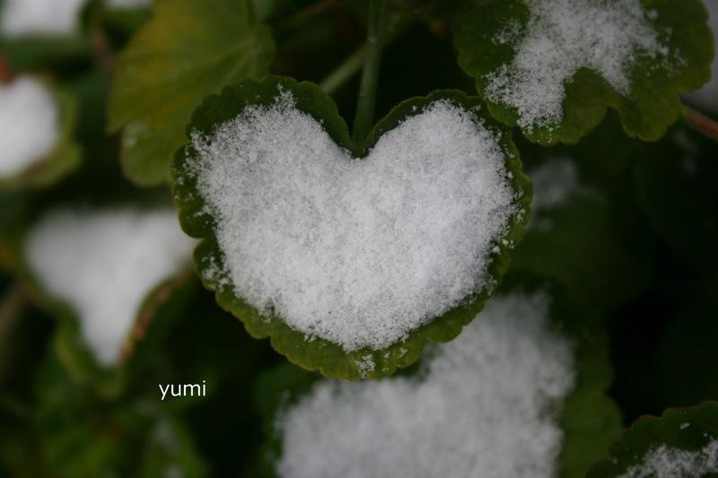 034_雪のgift