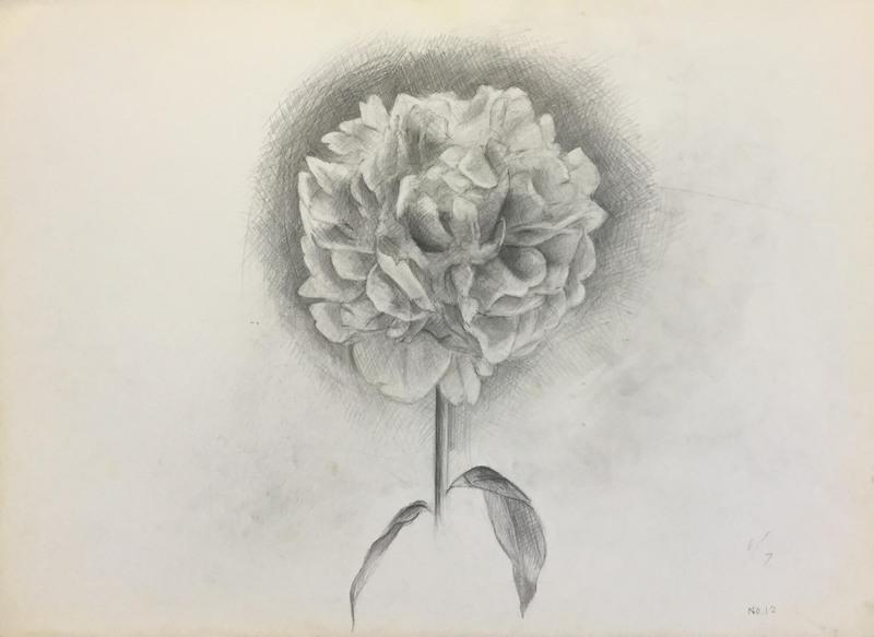 029_鉛筆デッサン シャクヤクの花 55×40㎝