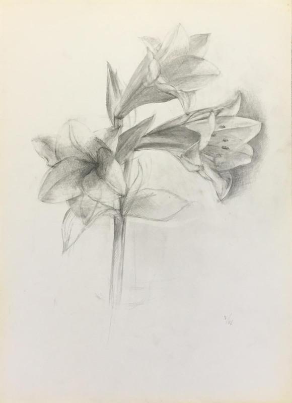 033_鉛筆デッサン ユリの花 40×55㎝